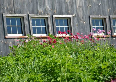 Garden in bloom at Historic Barns of Nipmoose, Photograph by Constance Kheel