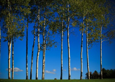 Aspen grove at Historic Barns of Nipmoose, Elario Photography Inc