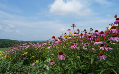 Hoosick Blooms Garden Tour by Civicure